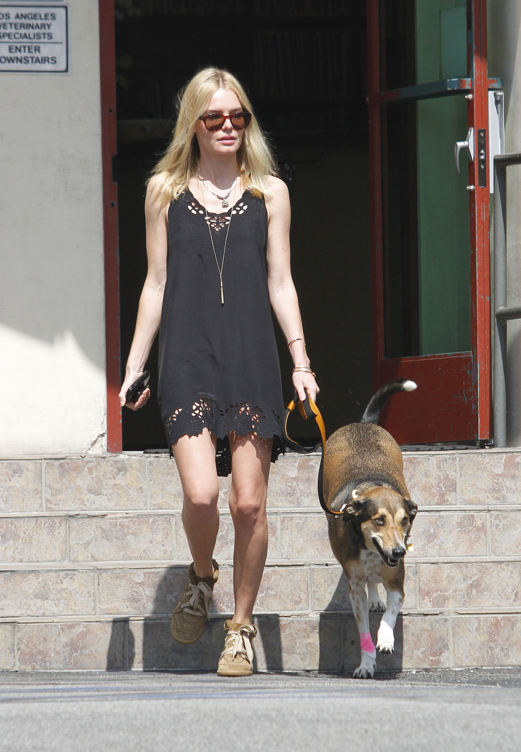 kate bosworth dog