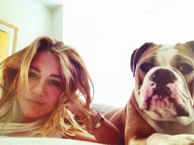 Miley Cyrus bulldog