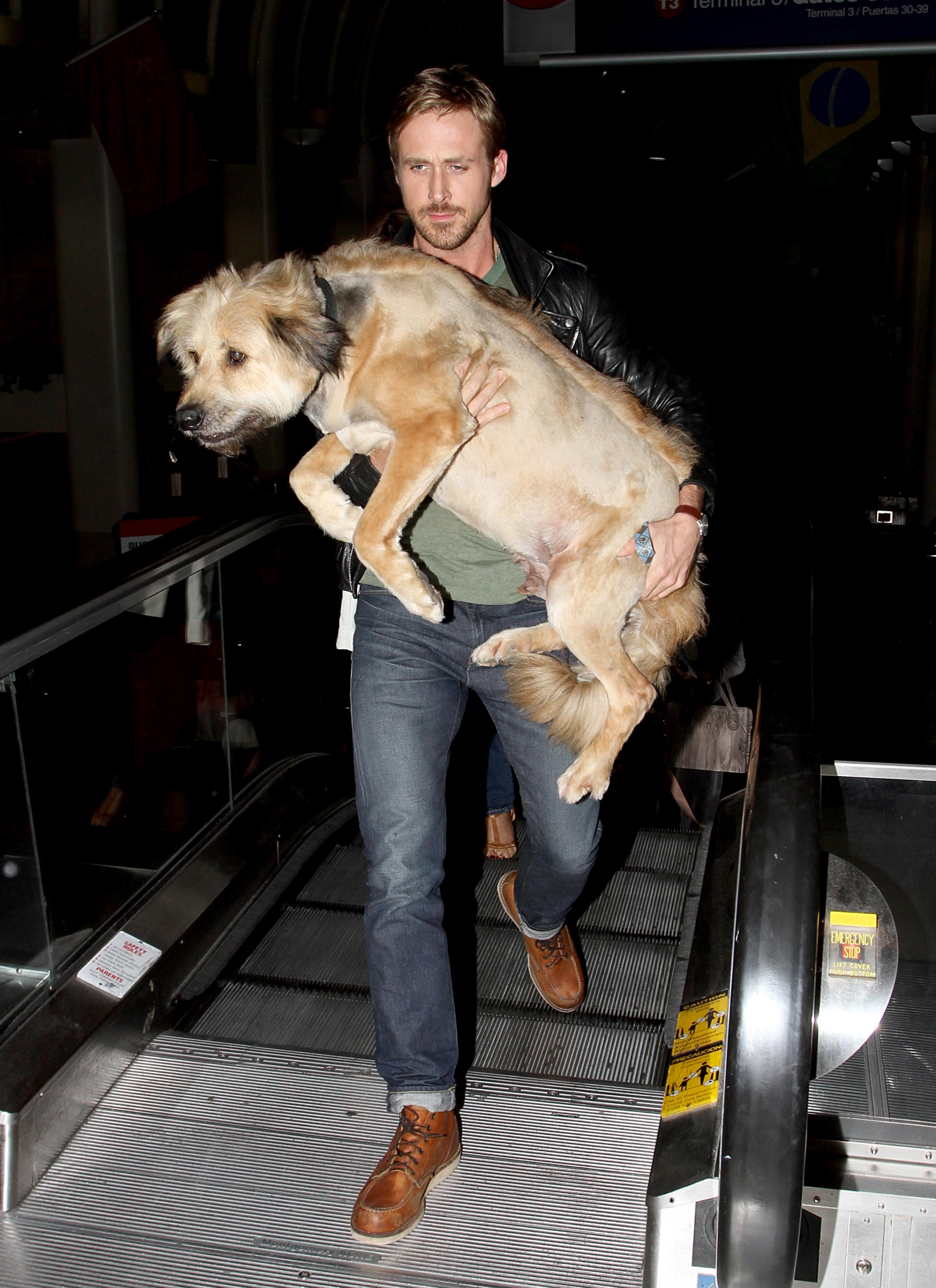 Ryan Gosling Bradley Cooper george charlotte dog