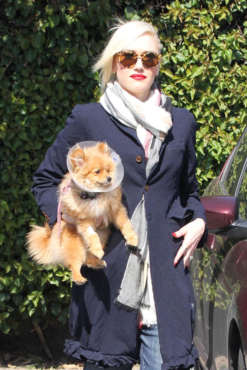 Gwen Stefani dog