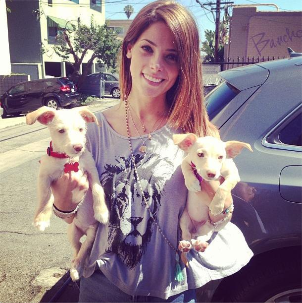 ashley greene puppies