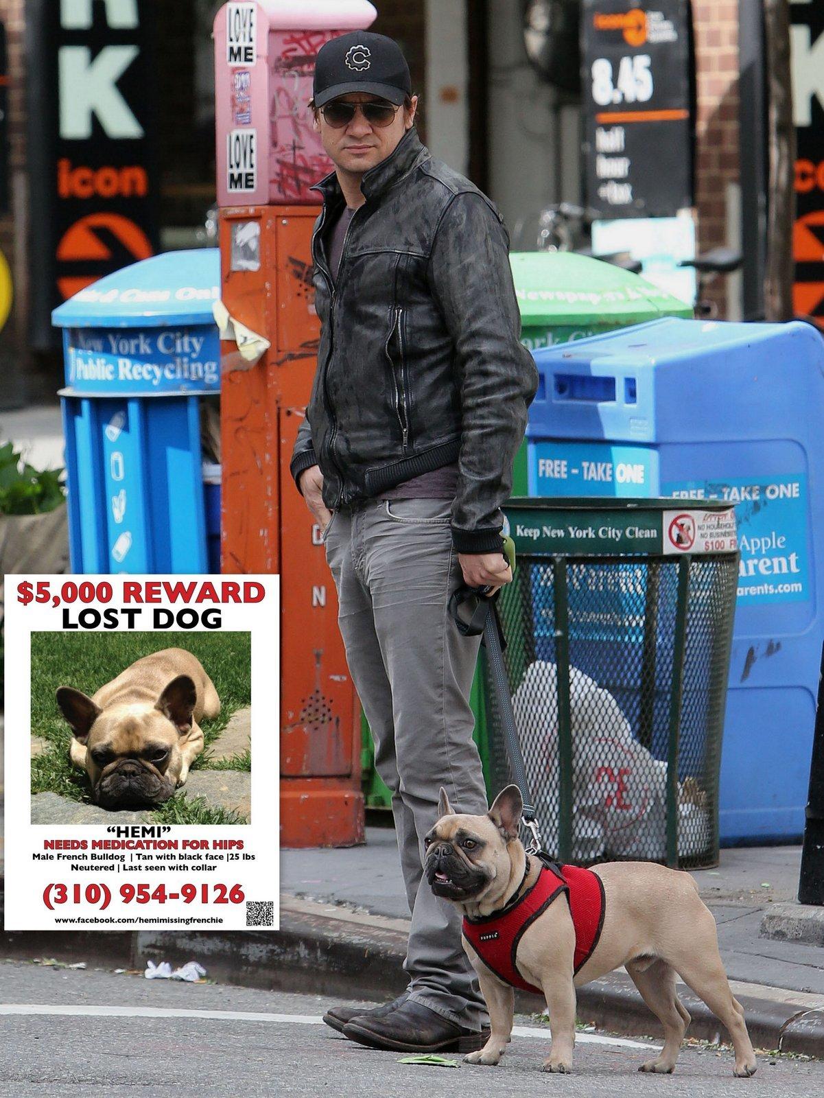 Jeremy Renner dog