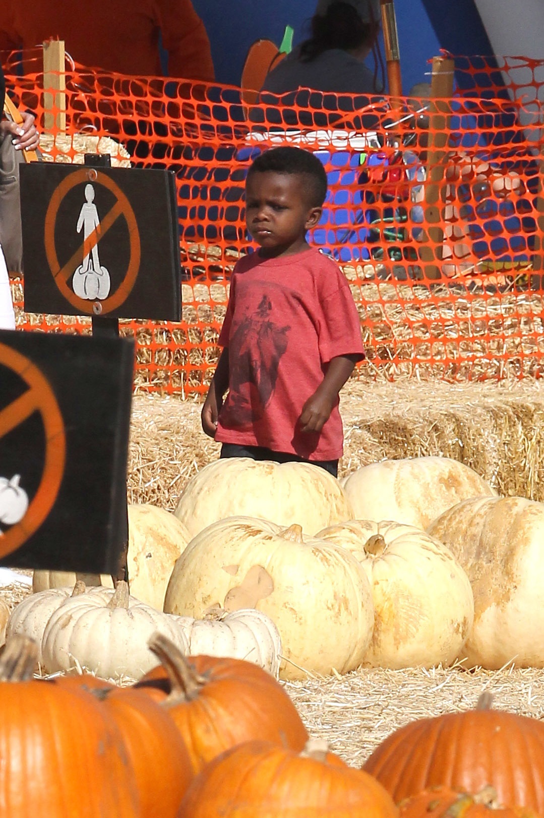 celebs at pumpkin patches out and about pumpkins halloween