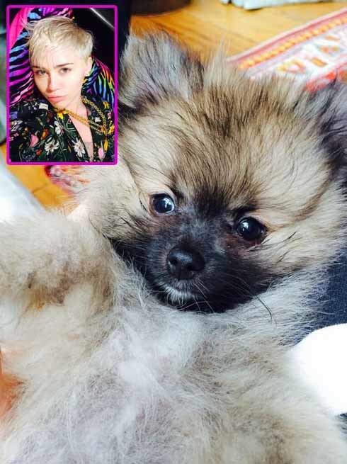 Miley Cyrus new puppy.jpg