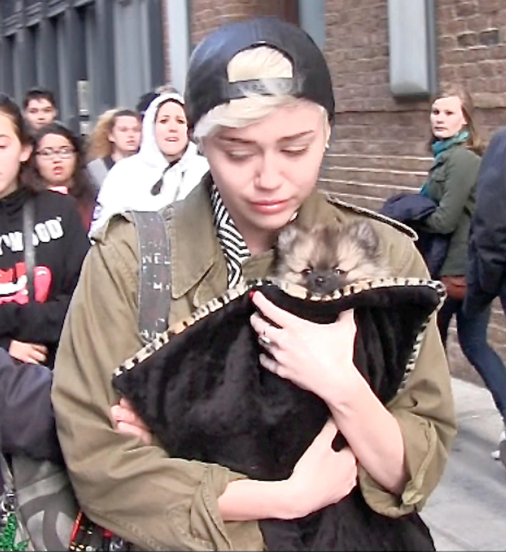 Miley Cyrus sad dog