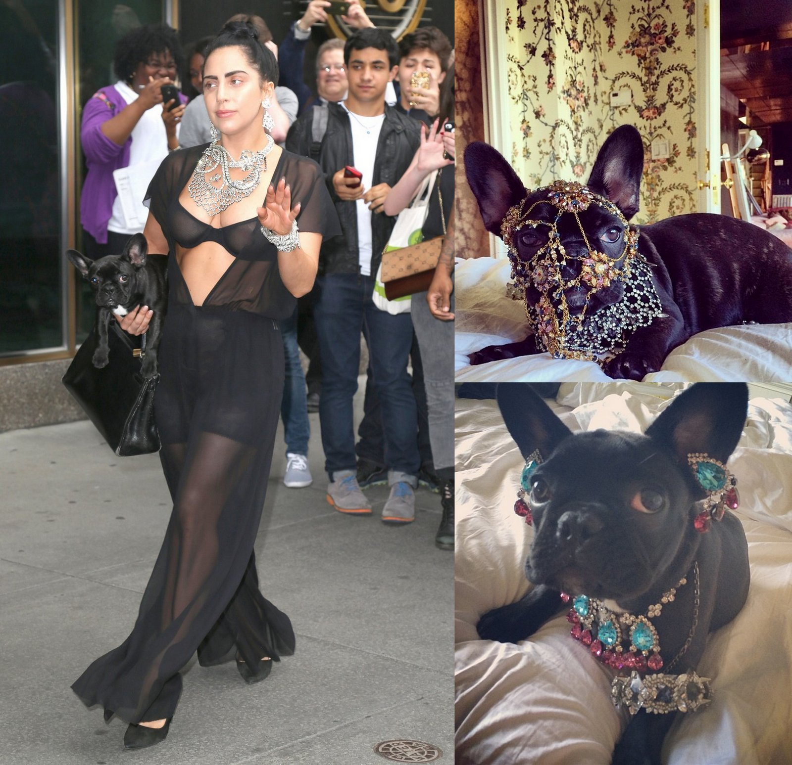 Gaga Asia