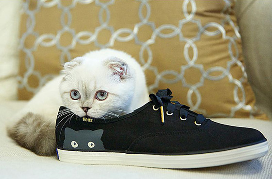 Taylor Swift's cat is now modeling