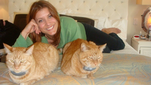 kate walsh cats