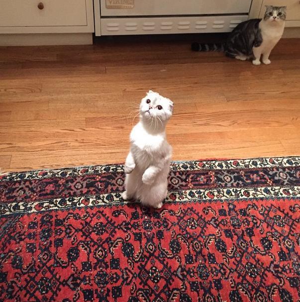 calvin taylor cats