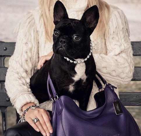 Lady Gaga's dog now has a Coach campaign