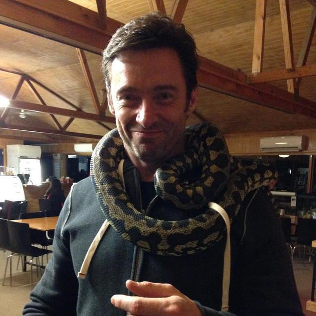 hugh jackman snake