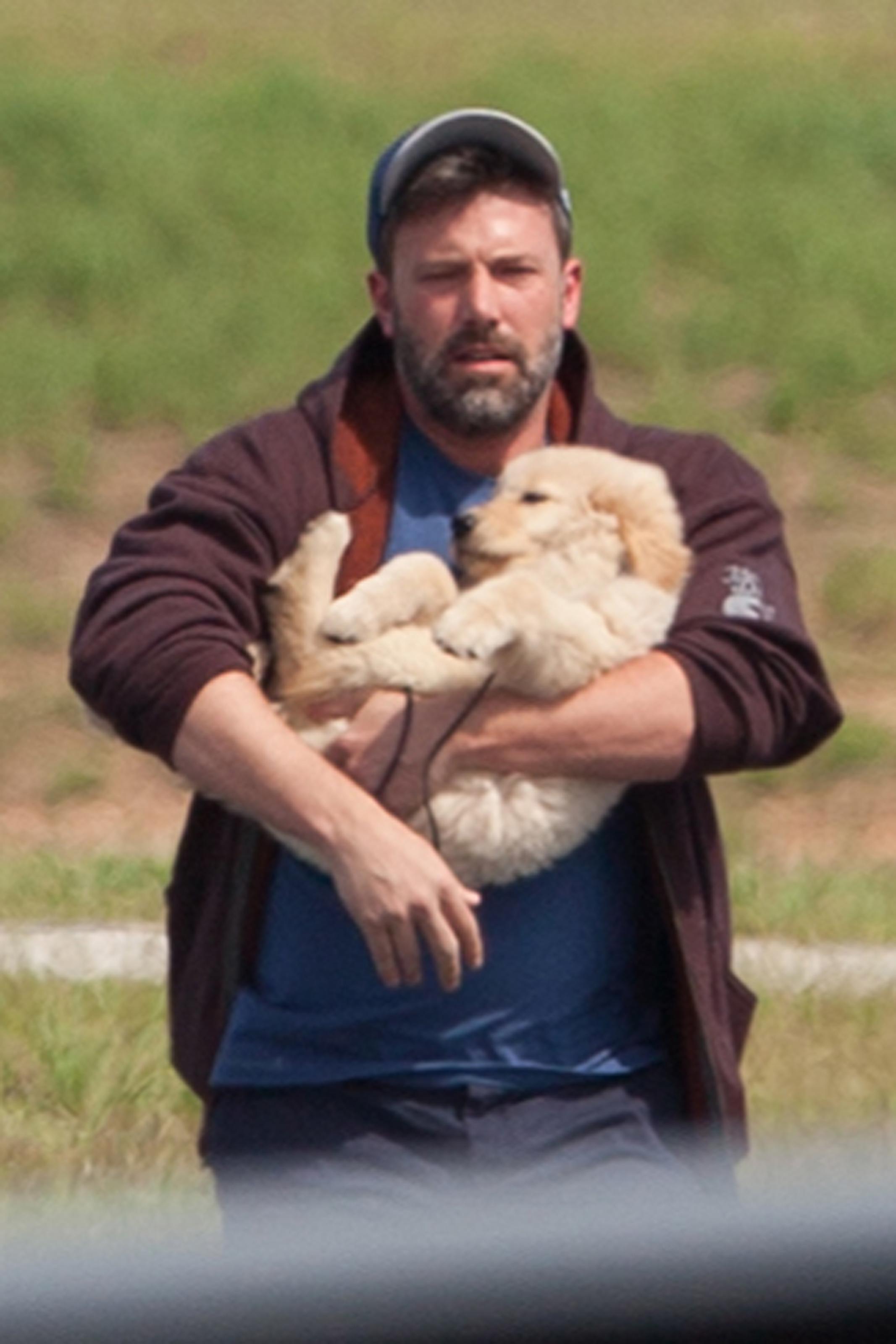 ben affleck puppy