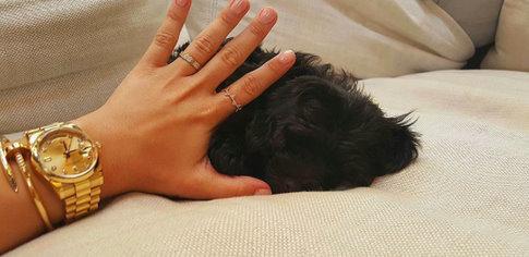 Demi Lovato gets a new puppy