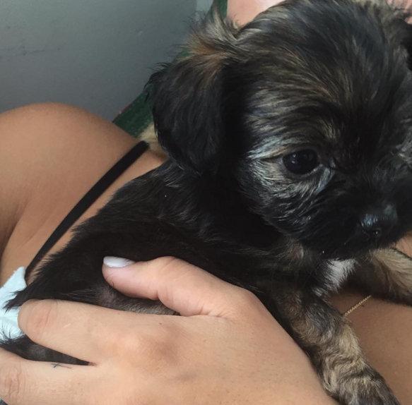 Newly single Sofia Richie gets a puppy