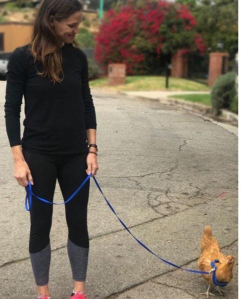 Jennifer Garner takes her chicken for a walk